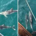 Avvistate famiglie di delfini nelle acque di Oasi Torre Calderina a Molfetta
