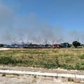 Bari, le campagne continuano a bruciare