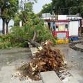 Tremendo temporale a Bari, strade allagate. Crolla un albero in piazza Diaz