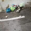 Carbonara, tra i rifiuti anche un gatto morto
