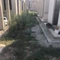 """Carbonara di Bari, i viali del cimitero sono una  """"giungla """""""