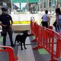 Stazione di Bari, coppia di turisti americani perde i bagagli. Recuperati dalla polfer