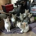 Sette gatti in officina cercano una nuova casa