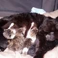 I gattini gettati nel cassonetto a Poggiofranco stanno bene. Hanno trovato casa a Matera