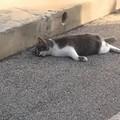 Carbonara, è strage di gatti. Un altro trovato avvelenato