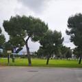 Nuovi alberi a Bari, negli ultimi cinque anni 15mila esemplari piantumati