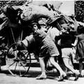 """Giorno del Ricordo, domani il seminario """"L'esodo giuliano-dalmata e il sistema dei campi profughi in Terra di Bari"""""""