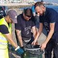 Bari, arrivano altri duecento cestoni per i rifiuti sulla costa