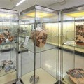 Domenica alternativa al museo nazionale archeologico di Altamura