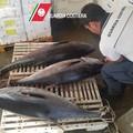 Costa cara la pesca di tonno rosso, inflitte multe per oltre 16 mila euro
