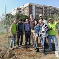 Giornata della Terra, piantati due ulivi in via Caldarola