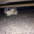 Bari, un coniglietto a spasso in città