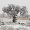Cartoline dalla Puglia imbiancata dalla neve