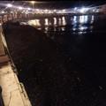 Forte vento su Bari, il lungomare invaso dalle alghe