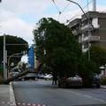 Forte vento su Bari, cade un albero in corso Alcide De Gasperi