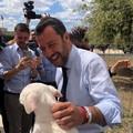 Salvini in visita al canile sanitario di Bari: «In arrivo 1 milione per combattere randagismo»