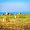 Cozze, c'è il sì della Regione Puglia al villaggio eco-chic nei trulli