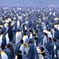 I Pinguini oscurati da Facebook aprono una pagina, e Sgarbi li difende