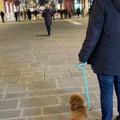 """Ninodangelo, il cane di  """"Il mio viaggio a New York """", avvistato a Bari"""