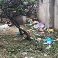 Rifiuti e alberi spezzati nella pineta di San Francesco, dopo la riapertura è già degrado