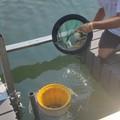Addio plastica nel mare, a Bari arriva il Seabin