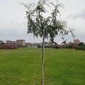 Giornata Mondiale della Terra, l'azione di guerrilla gardening di BariEcoCity