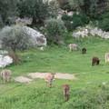 Luoghi del Cuore Fai, nella classifica 13 monumenti pugliesi