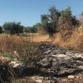 Bari, ancora roghi di rifiuti a Japigia. I residenti: «Non si respira»