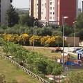 Il quartiere Loseto a Bari avrà un bosco sociale. Ottenuto un finanziamento di 500 mila euro
