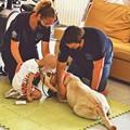 Camilla e Megan tornano a giocare coi bimbi dell'oncoematologia pediatrica a Bari