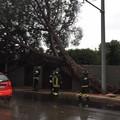 Pioggia e vento a Bari, cade un albero in corso Alcide De Gasperi
