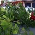 Corso Mazzini a Bari, grosso ramo si spezza e crolla sulle auto