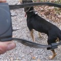 Collare elettrico al collo del cane, denunciato un 68enne
