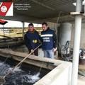 Sequestro di prodotti ittici nel foggiano per un valore di 4 mila euro