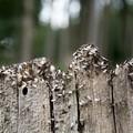 Bari invasa da formiche con le ali, ecco perché