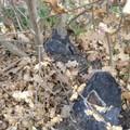 Acquaviva, taglio di alberi non autorizzato in un terreno di 3 ettari. Denunciata proprietaria