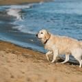 Viaggiare con un animale in Puglia? Ecco cosa conviene fare