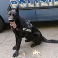 Camminava per la stazione di Bari centrale con la droga, bloccato dal cane poliziotto Faro