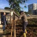 Bari, piantumati 47 nuovi alberi nei pressi del complesso scolastico di via Mitolo