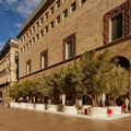 Milano, vengono dalla Puglia gli ulivi secolari portati in piazza?