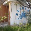 «Un nuovo Acquario per la città di Bari», la petizione si rivolge direttamente a Decaro