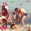 Bari, 65enne salvata e coccolata dai cani di salvataggio