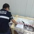 Ricci e prodotti ittici mal conservati in pescherie e punti sbarco dei pescherecci