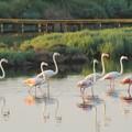 Giornata mondiale delle zone umide, diversi gli eventi in Puglia