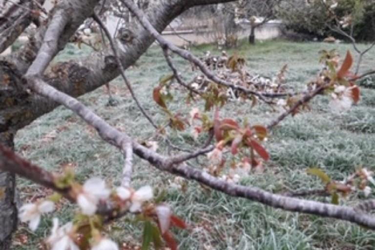 Le campagne di Bari a causa del gelo improvviso