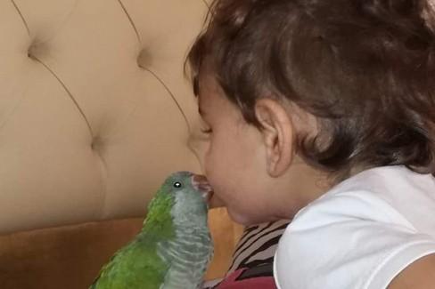 Il pappagallo smarrito