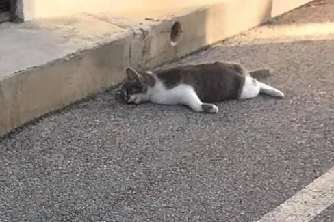 gatto avvelenato carbonara. <span>Foto Dal gruppo Facebook Carbonara e menz aller</span>
