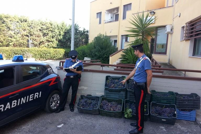Sorpreso a rubare uva a Carbonara, arrestato