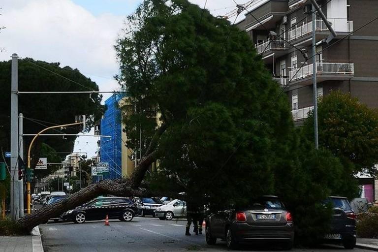 Albero caduto corso de Gasperi