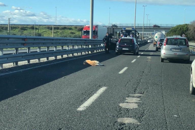 Traffico rallentato sulla Ss16, incidente a Cozze
